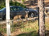 Deer at cabin door.JPG (1261491 bytes)